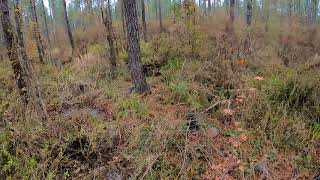 Deer Dog Drive12/8/2018 Cold Wet and Miserable