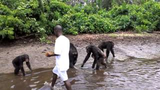 Chimpanzee Island Liberia Part 2 2