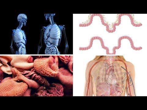 L Lysine Benefits the Gut, Brain & Herpes Outbreaks