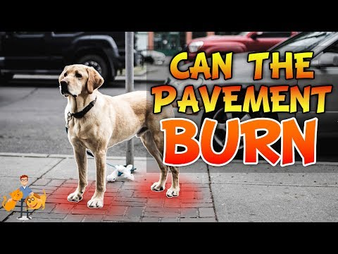 Can The Pavement Burn Dog Paws (for real)? | Hot Weather Dog Care pt 2