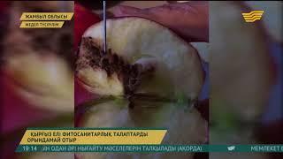 Қырғызстанға фитосанитарлық талаптарды орындамағаны үшін 137 рет ескерту құжаты жіберілген