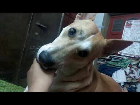 Dog Manicure The Ultimate Stress Buster Youtube