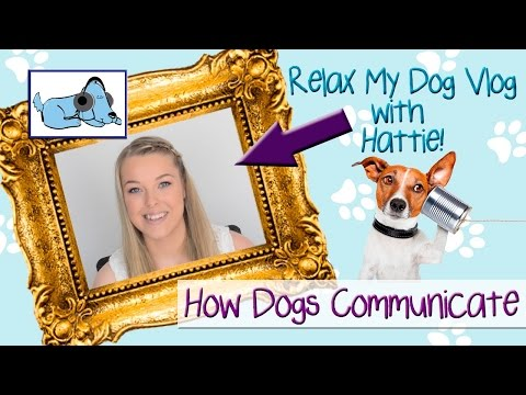 how-dogs-communicate-their-feelings!