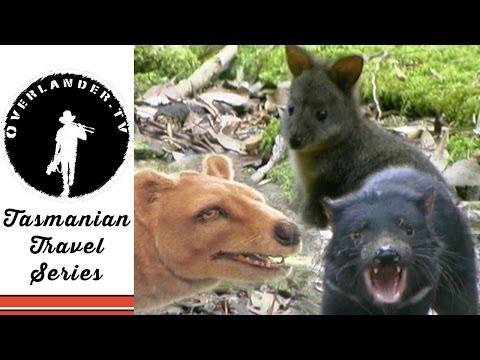 Tasmania Travel Video Guide, Meet a Local Travel Series