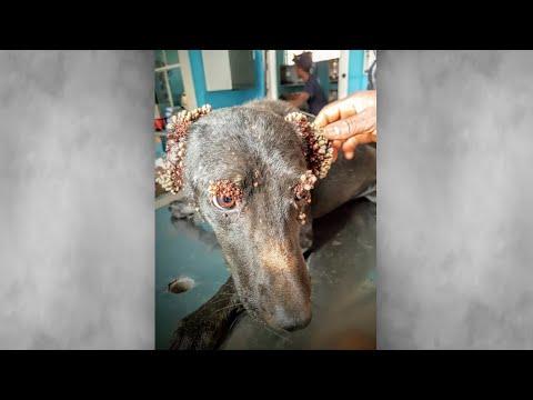 Когда ветеринар увидел эту собаку, он потерял дар речи