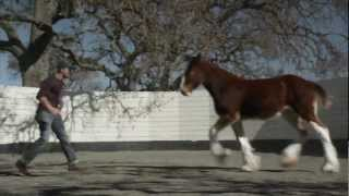 2013 official super bowl commercials budweiser the clydesdales
