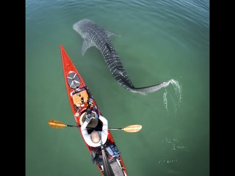 Paddling in a Living Sea