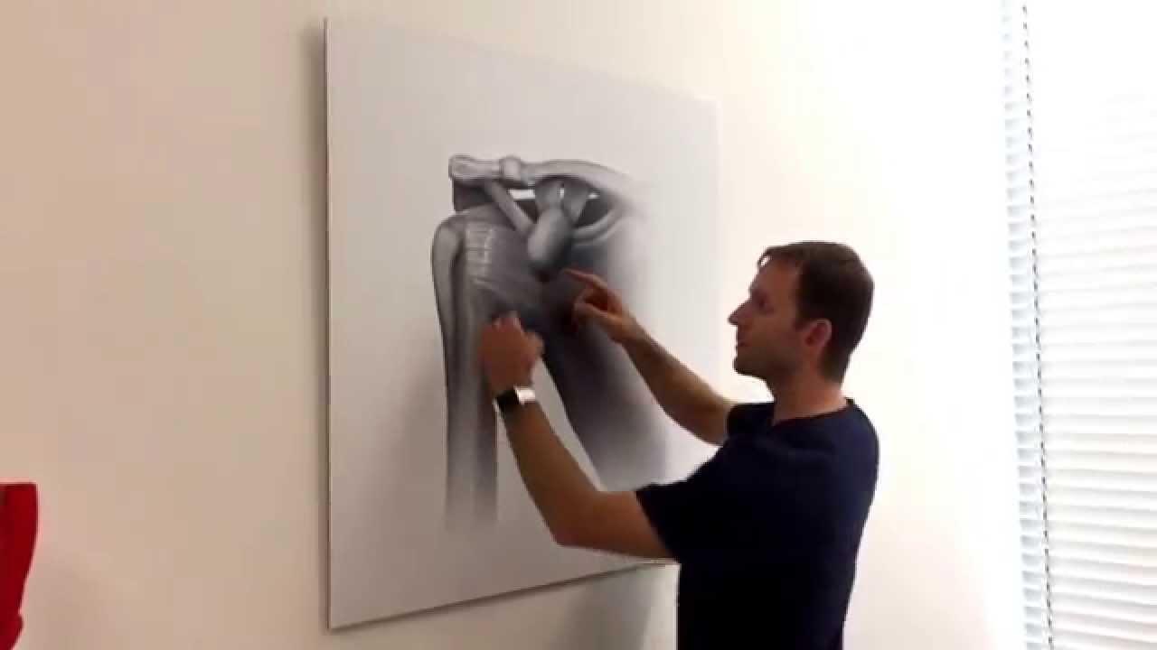 Funktionelle Anatomie der Schulter - YouTube