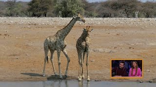 DOBRE VEDIEŤ! - Dúhový pochod žiráf