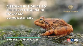 A Beginner's Guide to the Herpetofauna of Malaysia