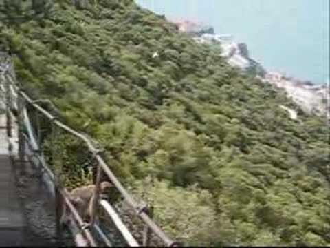 Gibraltarin Apinat