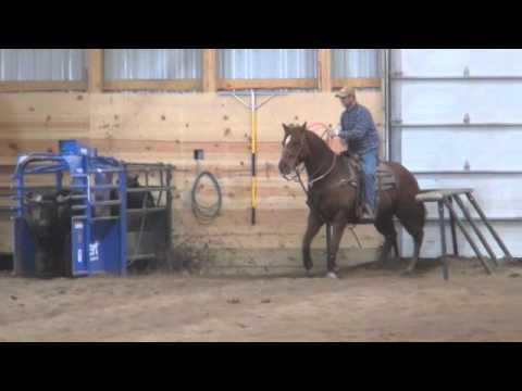 Tyree Sorrel Horse