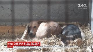 Мікрочіпи, походи в кіно та клінічні карти: як за кордоном вирішили проблеми безпритульних тварин