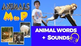 Animal Sounds 🎧 Words starting Letter MNOP | Animal Words Beginning With Letters M,N,O and P