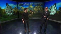 Red-Tailed Hawks: Last Week Tonight with John Oliver (HBO)