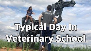 Typical Exam Day in Vet School | Vet School Vlog 3.5