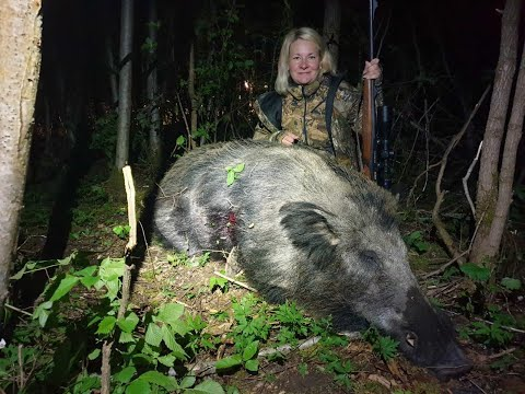 Wildboar Hunting From Stand