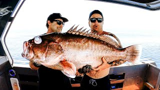 WE CAUGHT A NEW SPECIES OF GIANT GROUPER Scientific Report, Age And Eating Quality - Ep 158