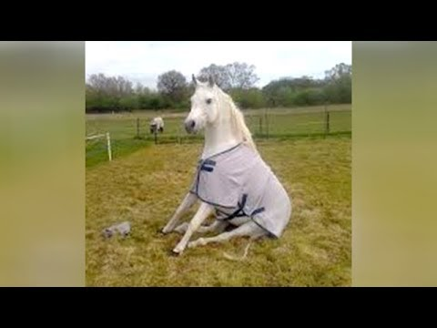 When HORSE & DOG TRAINING goes WRONG – LAUGH HARD at FUNNY VIDEOS