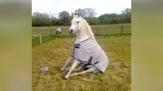 When HORSE & DOG TRAINING goes WRONG - LAUGH HARD at FUNNY VIDEOS