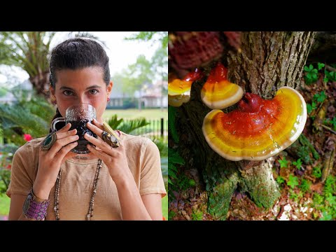 How to Consume Medicinal Mushrooms + 3 Surprising Benefits