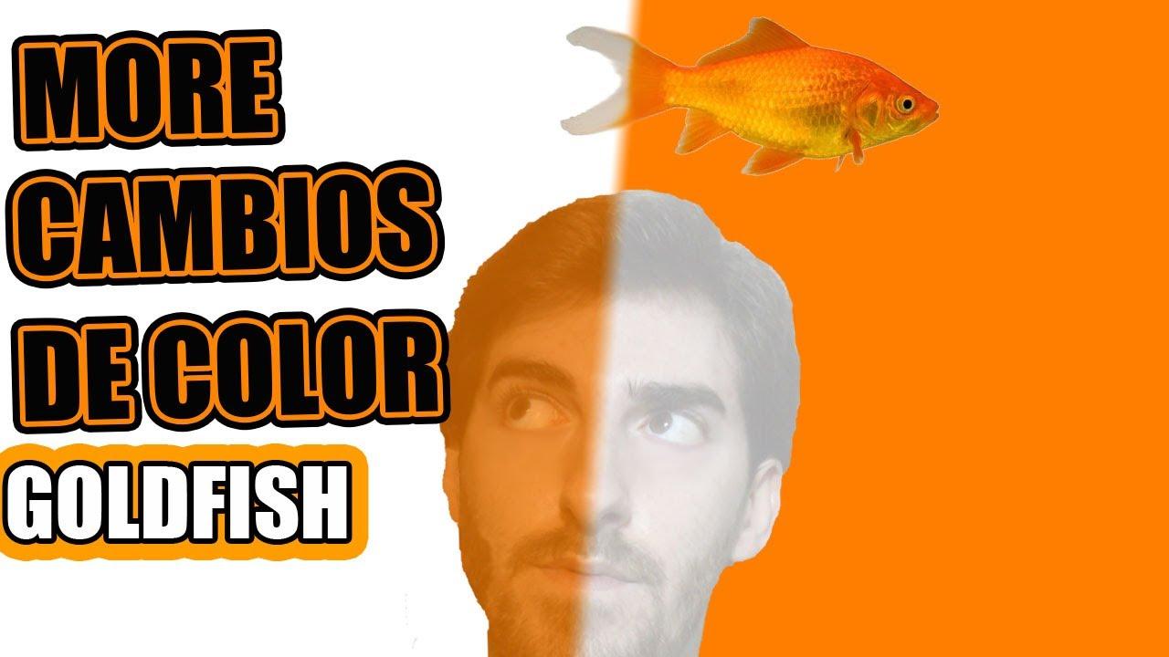 Los peces cambian de color goldfish pez sorpresa cuando for Comida viva para peces