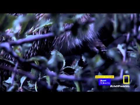 Secret Life of Predators S01 E01 Naked HDTV