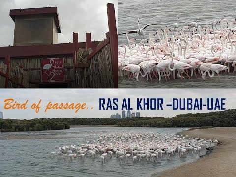 Ras Al Khor wildlife sanctuary – Dubai