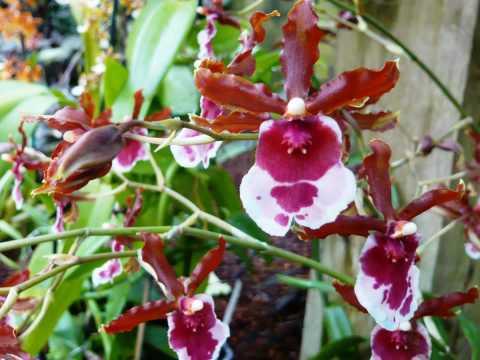 Beautiful Orchids from Atlanta Botanical Gardens