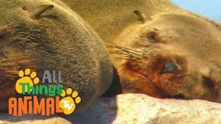 SEALS: Animals for children. Kids videos. Kindergarten | Preschool learning