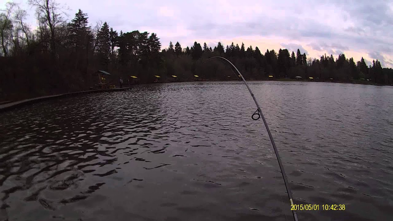 trout fishing moscow region pay pond dubeshniya