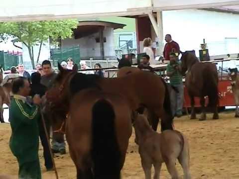 concurso caballos de Laviana