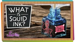 What Is Squid Ink?