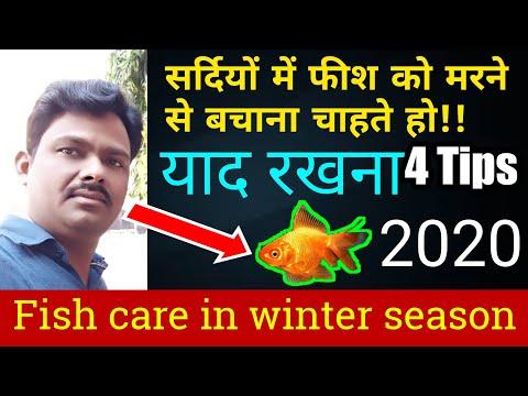 Aquarium Fish Diseases Care & Treatment In Winter Season | Aquarium Tank Me Fish Kyo Mar Jati Hai