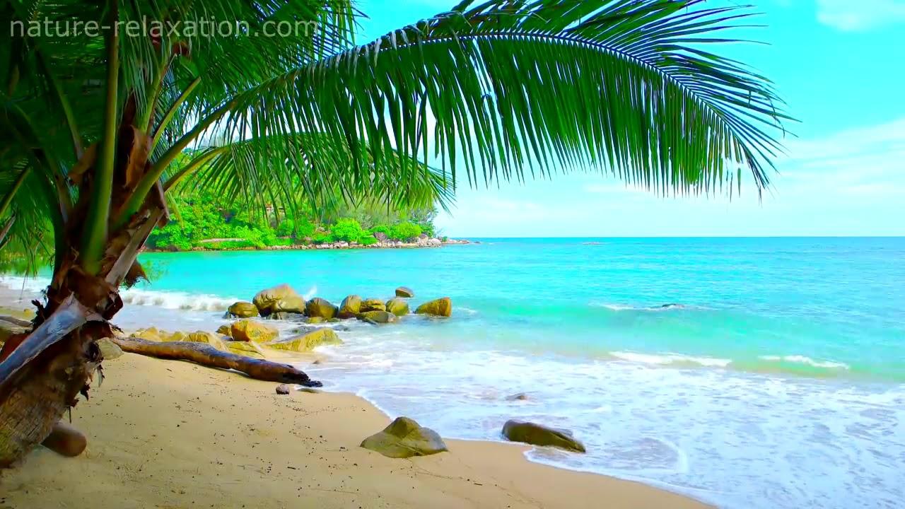 Tropical Island Beach Ambience Sound