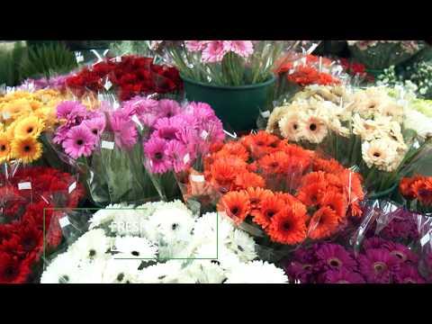Springtime Nurseries, CrewsHill, Enfield - Garden Centre