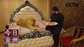 [今日亚洲]速览 胆肥!巴基斯坦小伙在家散养狮子| CCTV中文国际