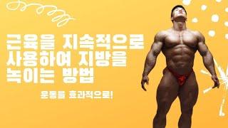 [추천운동방법] 쉬지 않고 근육을 사용해 지방을 녹여보…