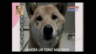 Perro ladra más bajo a pedido (subtitulado Español)