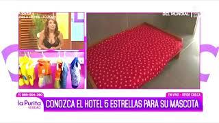 HOTEL MI PATA EN PURITA VERDAD 2018