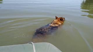 Плаваем по реке на лодке. Собака плывёт за нами.