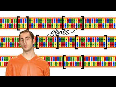KEZAKO: Comment fait on une analyse ADN?