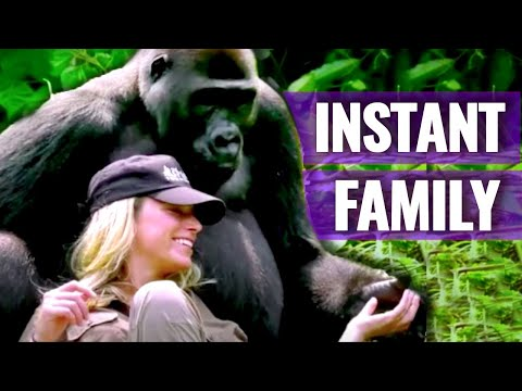 A Woman Approaches A Huge Gorilla And Gets This