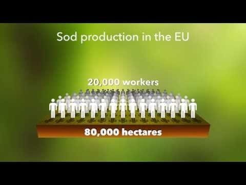 SodSat: more competitive turf grass producers