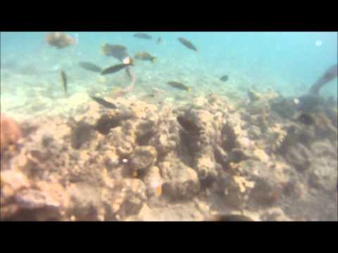 Snorkeling Bien unido daku west sanctuary Bohol Philippines