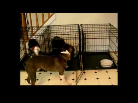 Best Dog Escape - Compilation Video