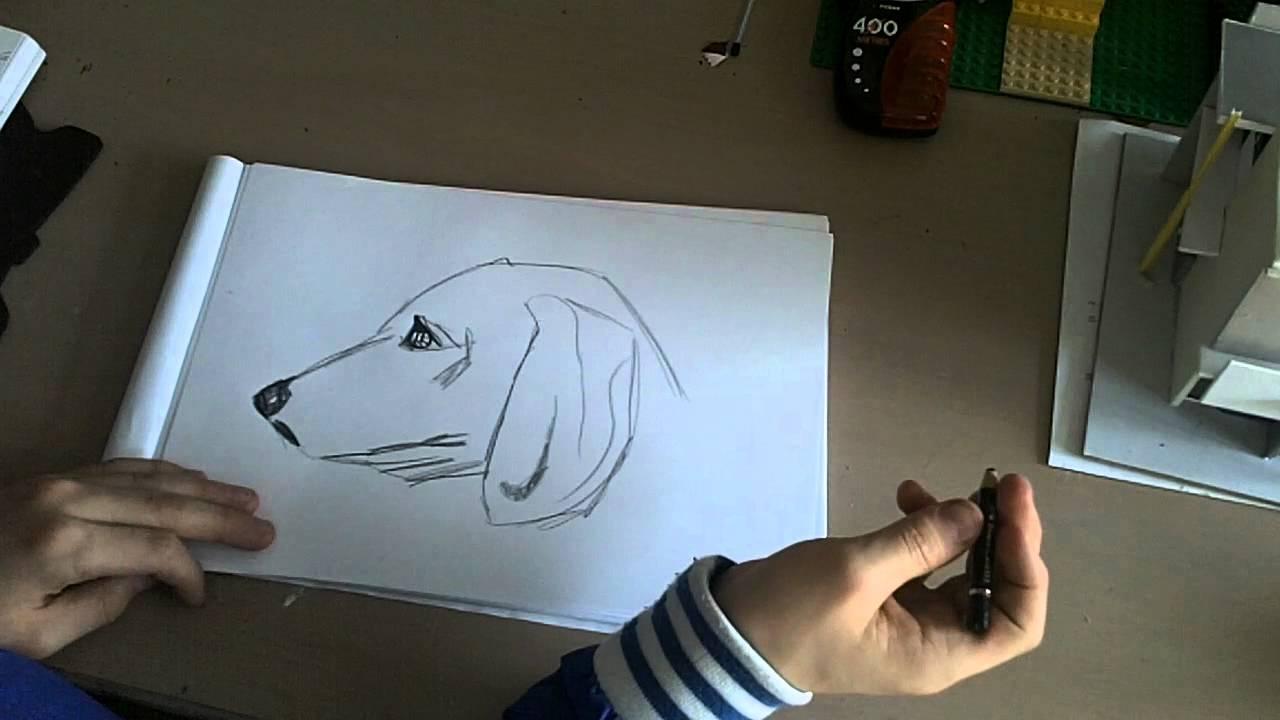 Tekenles 2 Hoe Teken Je Een Hond Hd Youtube