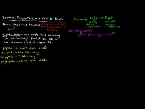 Amino Acids (Part 5 of 5) - Peptides, Polypeptides, and Peptide Bonds