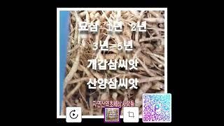 #묘삼#개갑삼씨앗#산양삼씨앗#장뇌삼씨앗종근문의 010 …