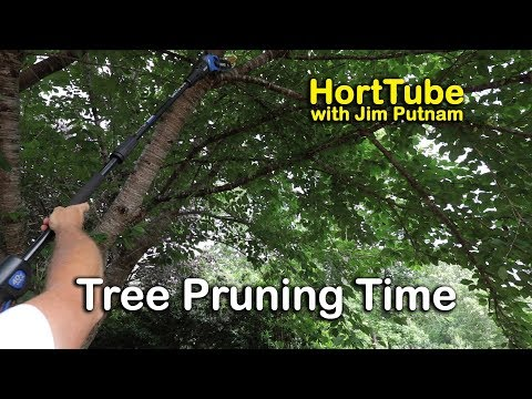 Tree Pruning Time In My Home Landscape